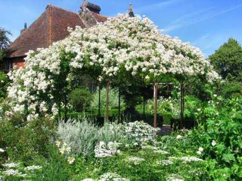 sissinghurst2006_white_Garden